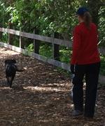 A Pedestrian and her Dog