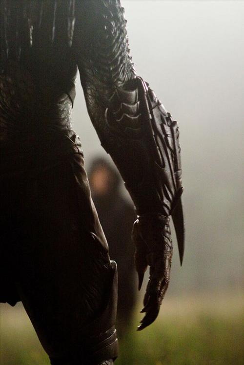 Robert Rodriguez's Predators 56260