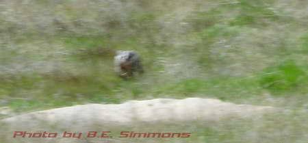 Badger chasing me 2006-DSC04982