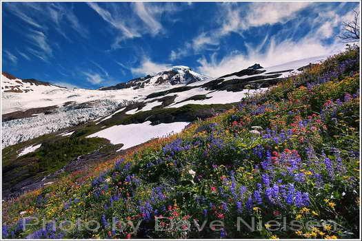 Dave Nielsen Photo: Mt. Baker Coleman Glacier