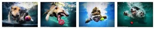Seth Casteel Underwater Dog Images
