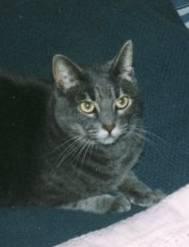 cat roadster - r.i.p. buddy 03