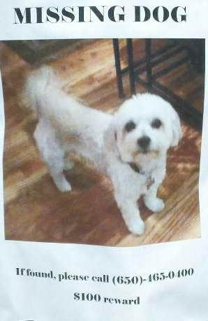 Lost Dog in Menlo Park