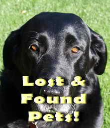 Lost pets, found pets... pet pets!!!