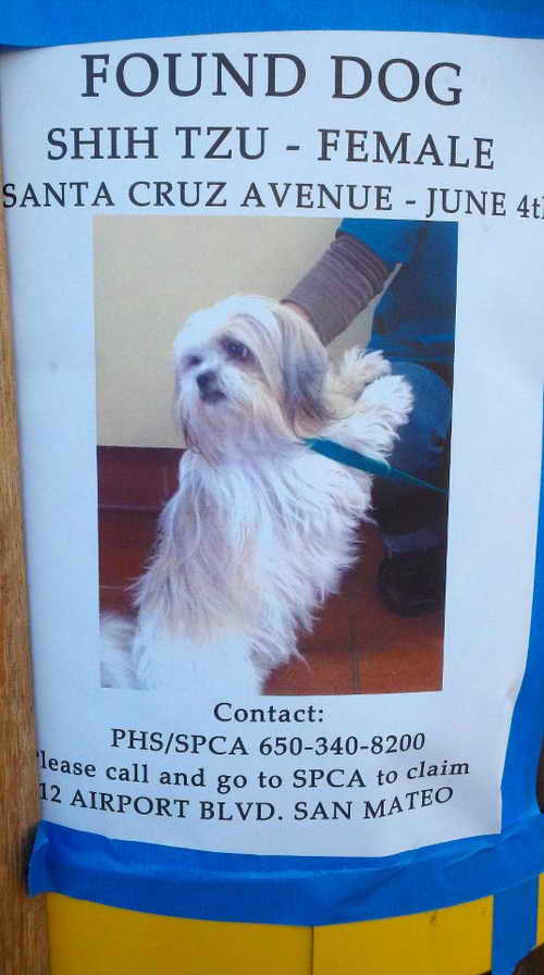 Lost and Found Dog (Shih Tzu) in Menlo Park, CA