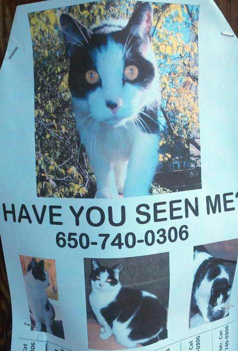 Lost Cat in Menlo Park