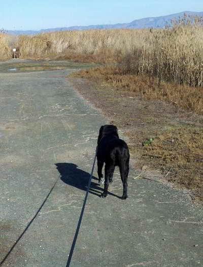 Izzy walking away to somewhere better
