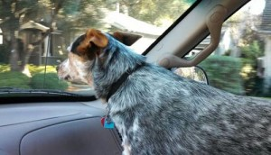 Travel with dog, looking for pet friendly hotels