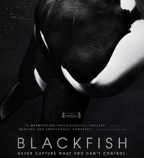 blackfish movie review The hollywood reporter movies blackfish: sundance review gabriela cowperthwaite's emotionally powerful blackfish documents a shattering reality far.
