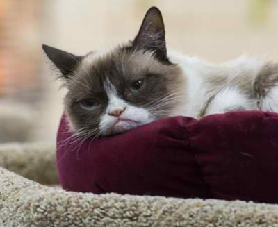 Grumpy Cat tv review